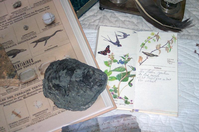 Visuel du colloque George Sand et les sciences de la Vie et de la Terre